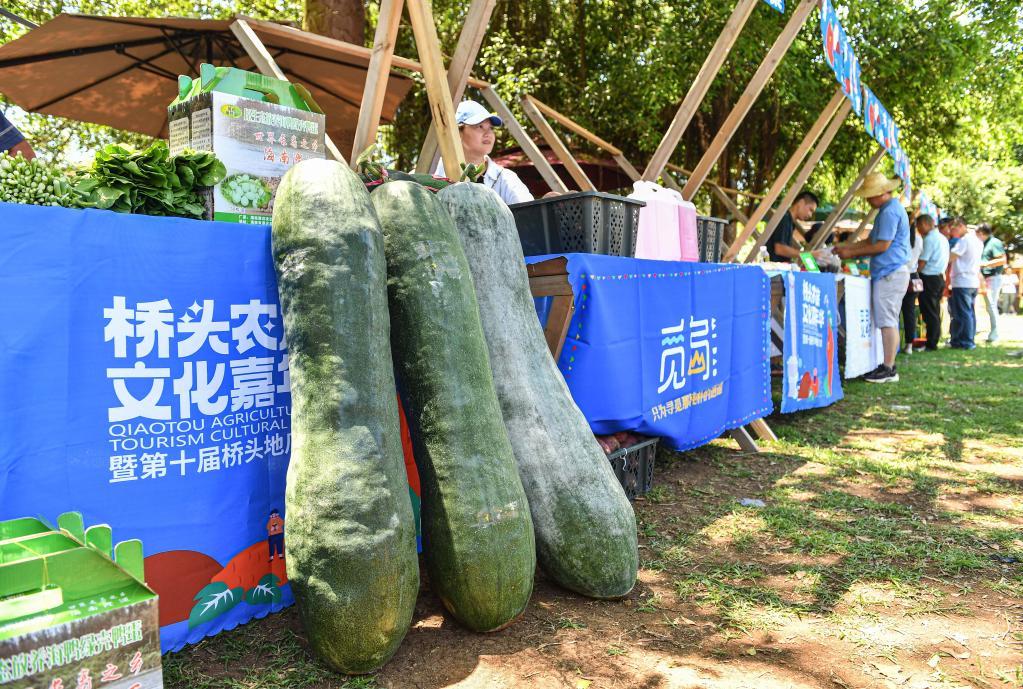 海南澄邁:體驗農旅過周末