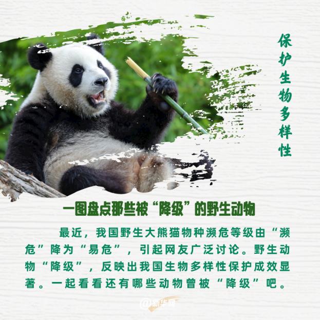 """保護生物多樣性 一圖盤點那些被""""降級""""的野生動物"""