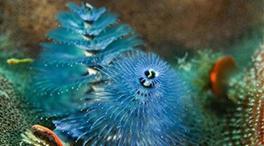带你走进珊瑚世界