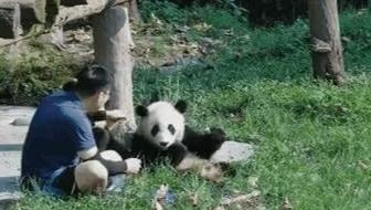 大熊猫和奶爸的下午茶时光