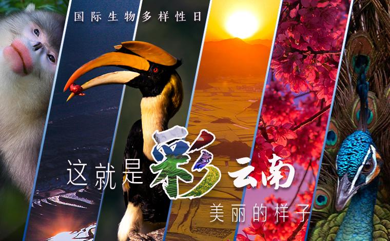 """國際生物多樣性日 這就是""""彩""""雲南美麗的樣子!"""